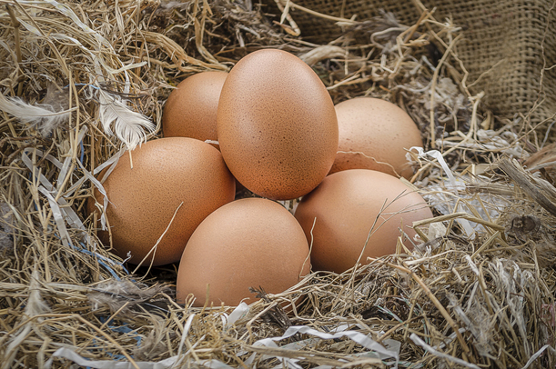 Mantiqueira Mantiqueira História do Ovo